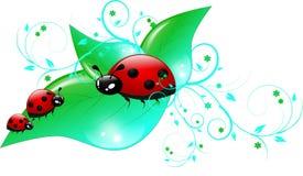 Drie lieveheersbeestjes op bladeren vector illustratie