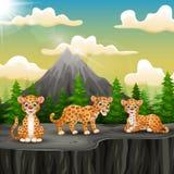 Drie luipaardbeeldverhaal die op de berg van een klip genieten royalty-vrije illustratie