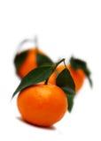 Drie mandarijnen Stock Afbeelding