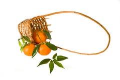 Drie mandarins Royalty-vrije Stock Afbeeldingen