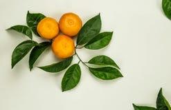 Drie mandarins sinaasappelen, mandarijnen, clementines, citrusvruchten stock afbeelding