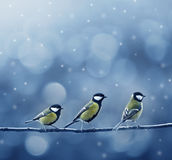 Drie meesvogels in de winter stock foto's