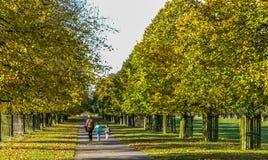 Drie mensen die langs een weg van lindebomen lopen Stock Afbeelding