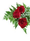Drie mooie rode rozen op een varenblad met uiterst kleine witte bloemen Stock Afbeeldingen