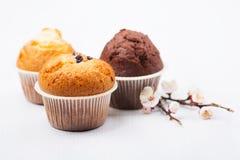Drie muffins met geïsoleerde abrikozentak Royalty-vrije Stock Foto