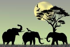Drie olifanten en reiger Stock Afbeelding