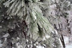 Drie omringd door bevroren boomtakken royalty-vrije stock afbeeldingen