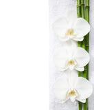 Drie orchideeën en takken van bamboe Royalty-vrije Stock Fotografie