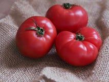 Drie organische tomaten Stock Afbeelding