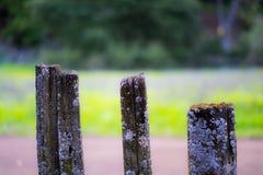 Drie oude houten stokkentribune naast de wandelingssleep royalty-vrije stock foto