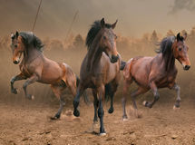 Drie Paarden royalty-vrije stock afbeelding