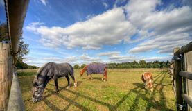 Drie paarden die in een paddock weiden stock afbeeldingen