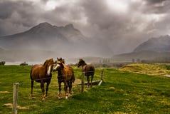 Drie paarden die op een het naderbij komen onweer wachten royalty-vrije stock fotografie