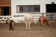 Drie Paarden het dansen Royalty-vrije Stock Foto's