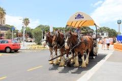 Drie paarden met een vervoer en koetsier Royalty-vrije Stock Afbeeldingen