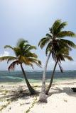 Drie palmen Stock Afbeelding