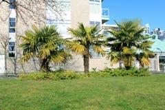 Drie palmen royalty-vrije stock fotografie