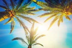 Drie Palmen Stock Afbeeldingen