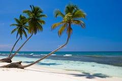 Drie palmen op het strandeiland Stock Foto
