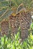 Drie palmspanningen Royalty-vrije Stock Foto