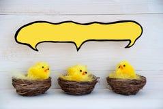 Drie Pasen-Kuikens met Lege Grappige Toespraakballon voor Exemplaarruimte Royalty-vrije Stock Foto's