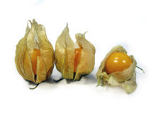 Drie physalis stock foto's