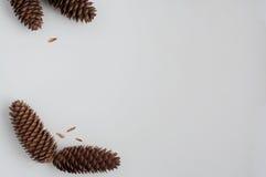 Drie Pinecones Stock Afbeeldingen