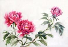 Drie pioenen Royalty-vrije Stock Afbeeldingen
