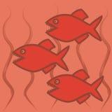 Drie piranha's Royalty-vrije Stock Afbeelding