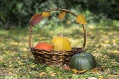 Drie pompoenen in rieten mand, gele spaghettipompoen, groene muscateldruifpompoen en de oranje pompoen van Hokkaido, de herfst ga Royalty-vrije Stock Afbeelding