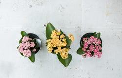 3, drie potten met bloemen op een steenachtergrond Stock Fotografie