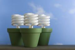 Drie Potten van de Spruit CFL Stock Fotografie