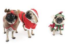 Drie Pugs van Kerstmis Stock Afbeelding