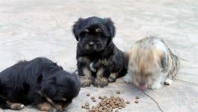 Drie puppy die buiten eten stock footage