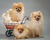 Drie puppy met sidecar royalty-vrije stock fotografie
