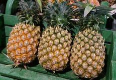 Drie Rijpe Ananas Gehele Vruchten met Groene Stam in een Houten Mand Stock Afbeelding
