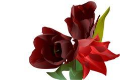 Drie rode bloementulpen Royalty-vrije Stock Afbeeldingen