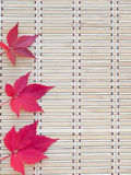 Drie rode dalingsbladeren Stock Fotografie