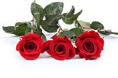 Drie rode rozen Royalty-vrije Stock Foto's