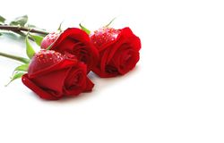 Drie rode rozen Royalty-vrije Stock Afbeeldingen