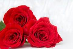 Drie Rode Rozen met bokeachtergrond exemplaarruimte - Valentijnskaarten en 8 Maart-Moeder Women' s Dagconcept stock foto's