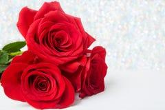 Drie Rode Rozen met bokeachtergrond exemplaarruimte - Valentijnskaarten en 8 Maart-Moeder Women& x27; s Dagconcept royalty-vrije stock fotografie