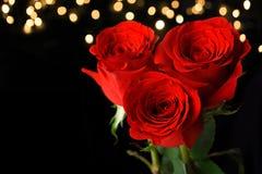 Drie rode rozen op donkere achtergrond Royalty-vrije Stock Afbeelding
