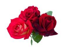 Drie rode rozen zijn op een witte achtergrond Royalty-vrije Stock Afbeelding