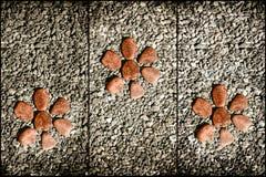 Drie rode steenbloem op de rotsen Stock Foto's