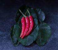 Drie roodgloeiende Spaanse peperpeper royalty-vrije stock afbeelding