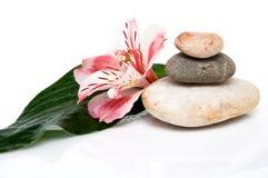 Drie rotsen, blad en bloem Royalty-vrije Stock Foto's