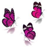Drie roze monarchvlinder stock afbeeldingen