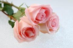 Drie roze rozen Stock Foto's