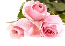 Drie roze rozen met waterdalingen. Royalty-vrije Stock Afbeelding